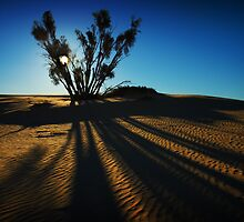 mungo dunes by louise