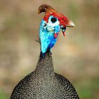 THE HELMETED GUINEAFOWL by Magaret Meintjes