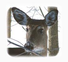 deer by PRPhoto