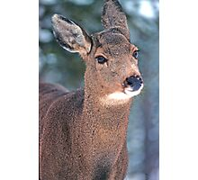 bambi Photographic Print
