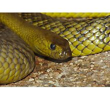 The Worlds Deadliest Land Snake. Photographic Print