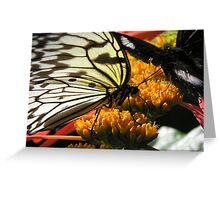 Butterflies I Greeting Card
