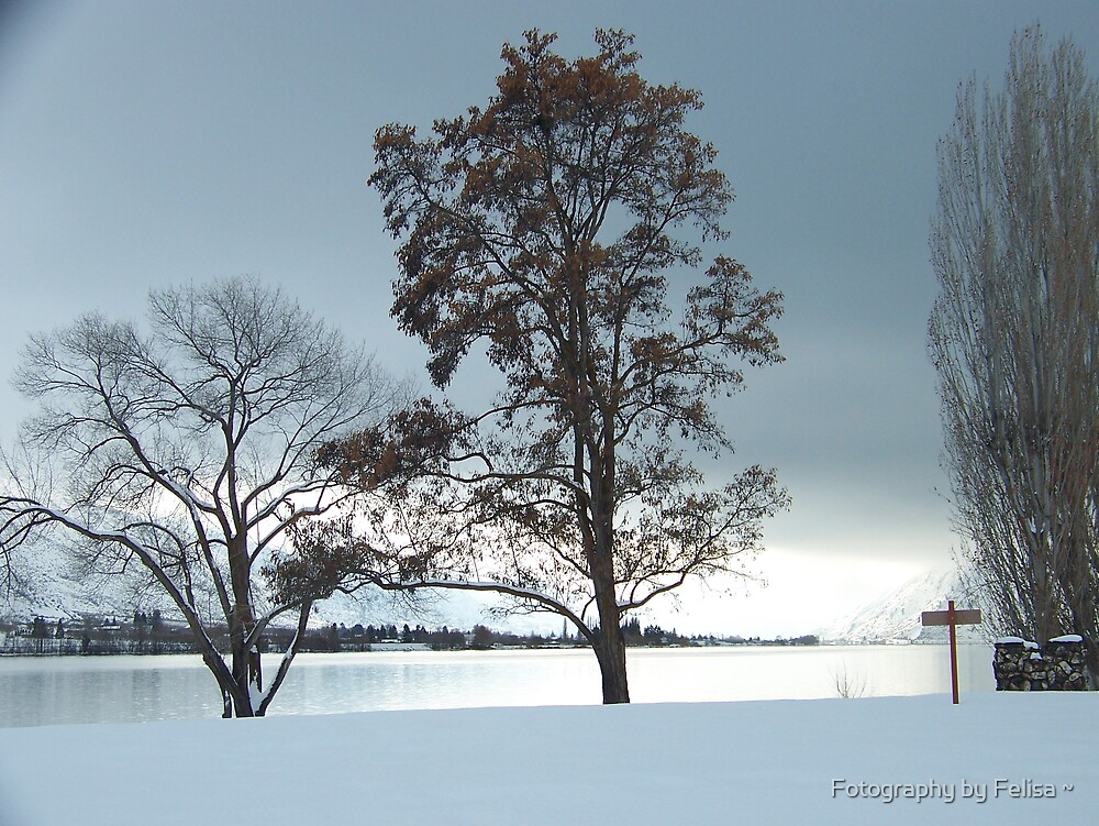 Cold Blue by Fotography by Felisa ~