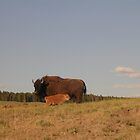 Two Bison by sunsetgirl