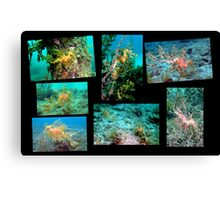 Super Six Canvas Print