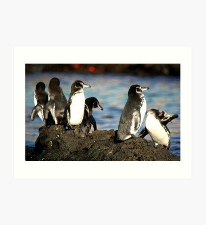 Galapagos Penguins Art Print