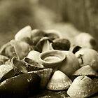 Shells by Alan May
