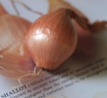 Not an onion, sweeter. by Tom McDonnell