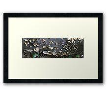 HDR Composite - Bracket Fungus on a log Framed Print