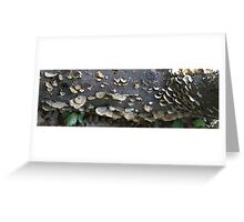 HDR Composite - Bracket Fungus on a log Greeting Card