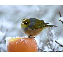Don't I Look Beautiful With A Snow Crown! - Wax-Eye - NZ Photographic Print