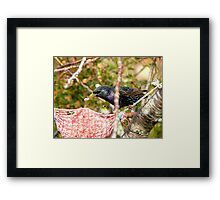 Ummm! Excuse Me Sir.. That My Food Your'e Eating - Starling - NZ  Framed Print