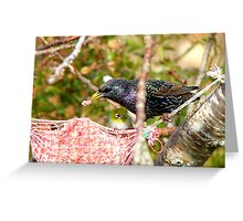Ummm! Excuse Me Sir.. That My Food Your'e Eating - Starling - NZ  Greeting Card