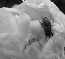 bumbling without color by gracecaptured