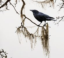 Winter Crow by Colleen Farrell