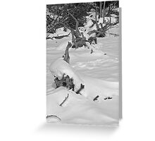 Cold Black & White Greeting Card