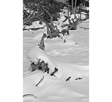 Cold Black & White Photographic Print