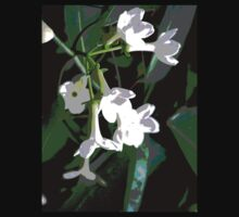 Stephanotis by Virginia McGowan