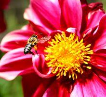 Bee by Johann Hurter
