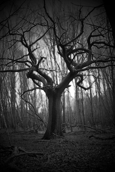 haunted tree by Vincent Teh