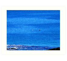 Distant Diving Dolphins......... Art Print