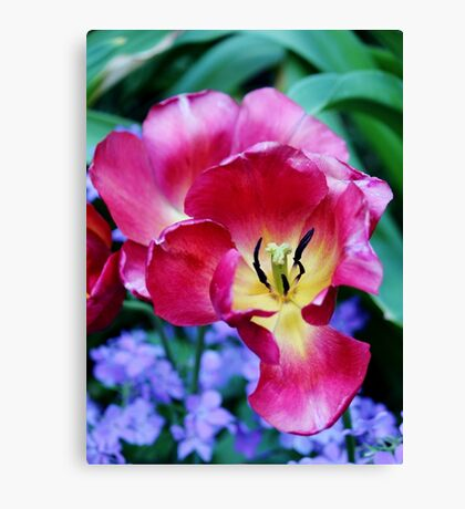 Pink, Yellow And Blue Flowers Canvas Print