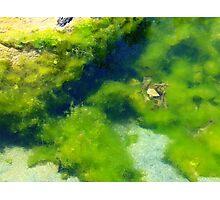Green Sea Algae.... Photographic Print