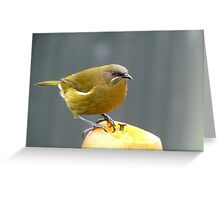 I'm Hungry For The Big Apple - Bell-Bird - Southland Greeting Card