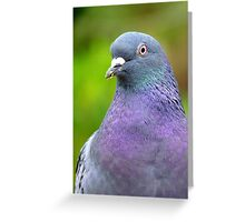 I Am Supposed To Keep Abreast Of Things! Pigeon - NZ Greeting Card