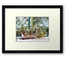 We Are Gathered Here Together In The Presence Of Nature...Silver-eyes -NZ Framed Print