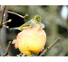 Snow Is One Thing!!..But Wind.. It's Just The CHERRY on Top!! - Silver-Eye - NZ Photographic Print