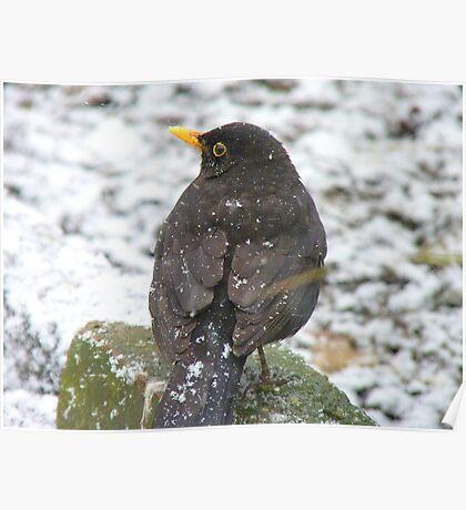 I Always Wanted To Be A White Bird...Blackbird....NZ Poster