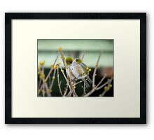 I Love You... - Silver-Eye - NZ Framed Print