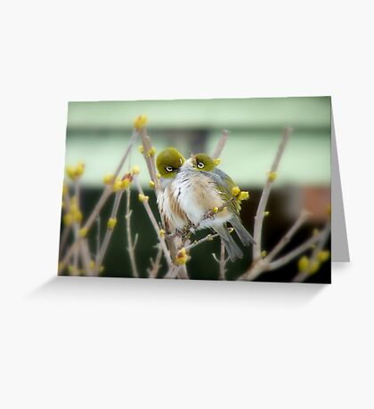 I Love You... - Silver-Eye - NZ Greeting Card