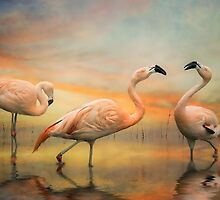Flamingo Dusk by Tarrby