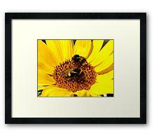Many Hands Make Light Work!! - Bumblebees - NZ Framed Print