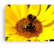 Many Hands Make Light Work!! - Bumblebees - NZ Canvas Print