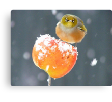 This Toffee Apple Is ALL MINE!!! - Silver-eye - NZ Canvas Print
