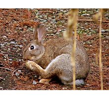 Underfoot Pine Needles Are A Pain In The...Wild Bunny/Hare - NZ  Photographic Print