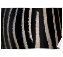 Zebra Markings Poster