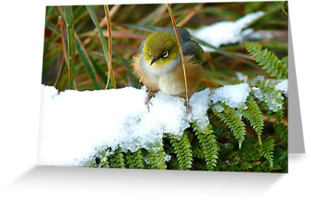 "Gosh!! How On Earth Will I ""FERNish This Place? - Silver-Eye - NZ by AndreaEL"