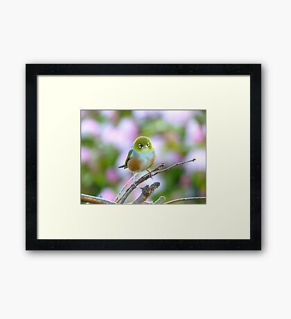 I Wore My Best Waistcoat To Welcome Spring!!! - Silver-Eye - NZ Framed Print