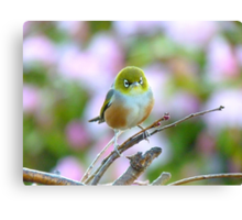 I Wore My Best Waistcoat To Welcome Spring!!! - Silver-Eye - NZ Canvas Print