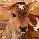 Umm.. If I Win The Beauty Pageant...I Will Promote World Peace...- Calf - NZ by AndreaEL