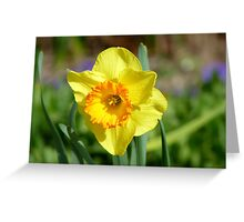 Dance With Daffodils On A Spring Breeze - Daffodil - NZ Greeting Card
