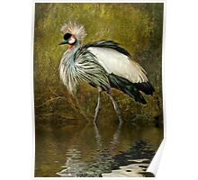 Great Crowned Crane Poster