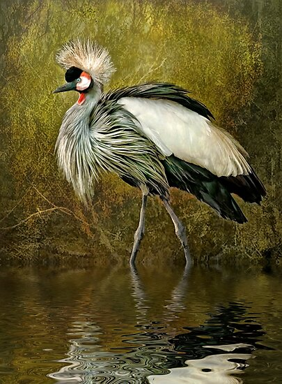 Great Crowned Crane by Tarrby