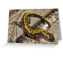 Long Toed Salamander  Greeting Card