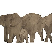 African Bush Elephants by Anemone
