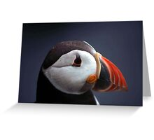Puffin Head Greeting Card
